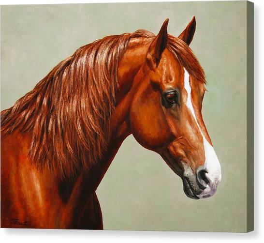 Sorrel Canvas Print - Morgan Horse - Flame by Crista Forest
