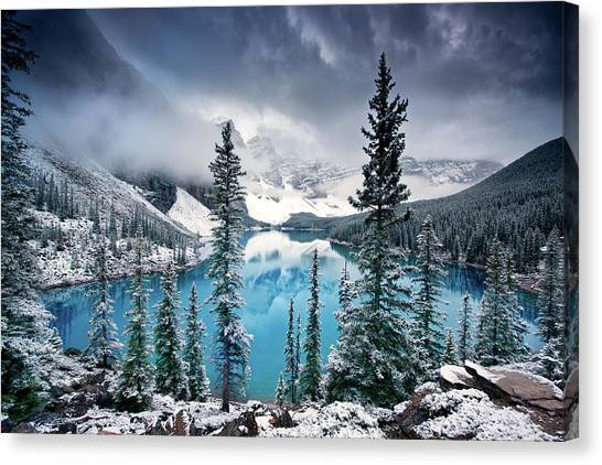 Pine Trees Canvas Print - Morning Blues by Trevor Cole