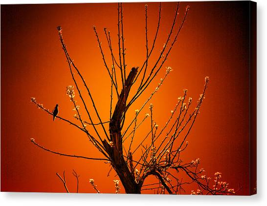 Morning Dove Sunrise Canvas Print