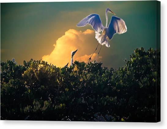 Morning Egret Canvas Print
