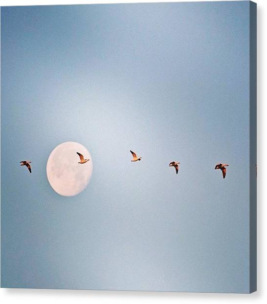 Arkansas Canvas Print - Morning Flight #geese #nature #arkansas by Scott Pellegrin
