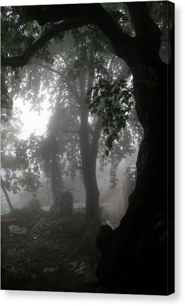 Morning Fog Canvas Print by Arie Arik Chen