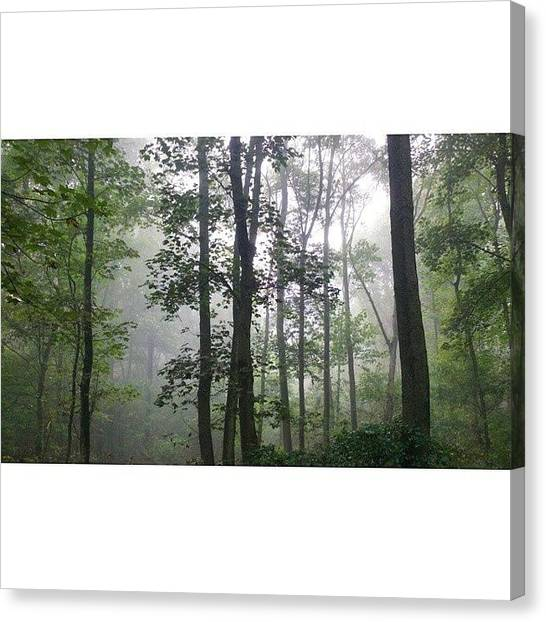 Foggy Forests Canvas Print - #morning #foggy #nebel #forest by Tim Blaton