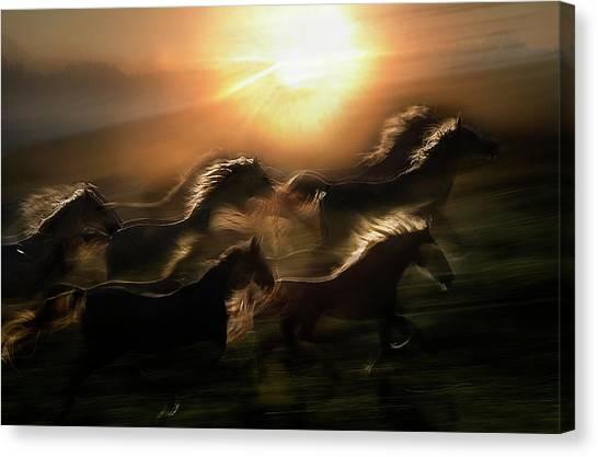 Horses Galloping Canvas Print - Morning  Gallop by Milan Malovrh