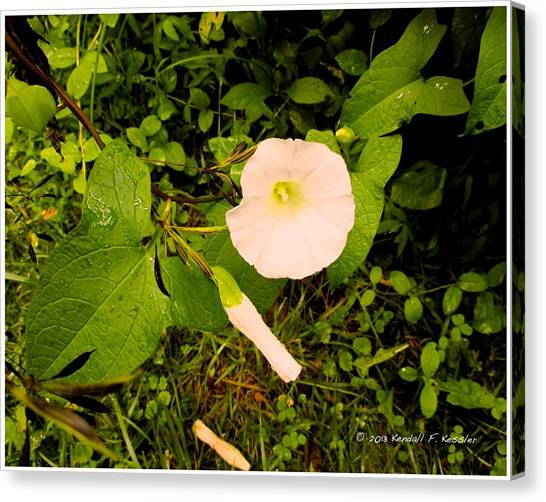 Morning glory flower canvas prints page 28 of 50 fine art america morning glory flower canvas print morning glory glow by kendall kessler mightylinksfo