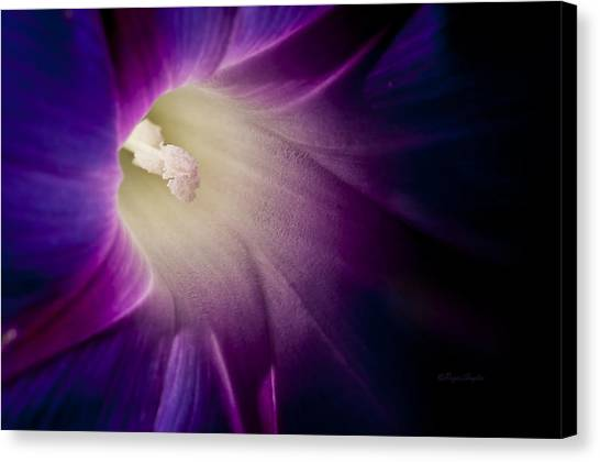 Morning Glory Purple Canvas Print