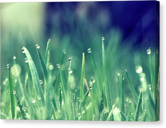 Blade Of Grass Canvas Print - Morning Grass by Photography By Lana Galina