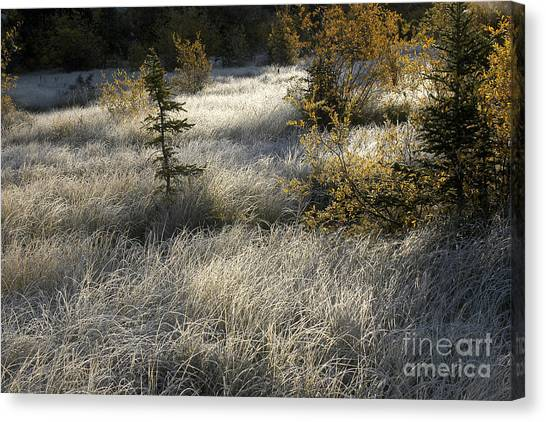 Morning Hoar Frost Canvas Print