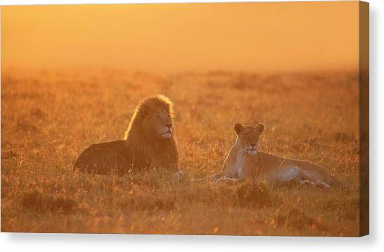 Kenyan Canvas Print - Morning In Africa by Phillip Chang