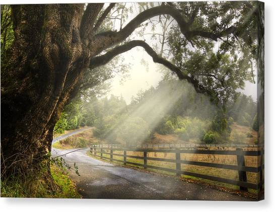 Foggy Forests Canvas Print - Morning Light by Debra and Dave Vanderlaan