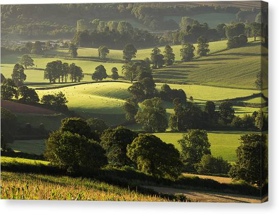 Morning Light On Fields Canvas Print