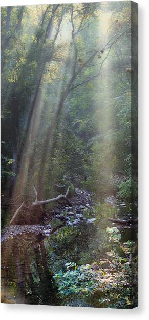 Foggy Forests Canvas Print - Morning Light by Tom Mc Nemar