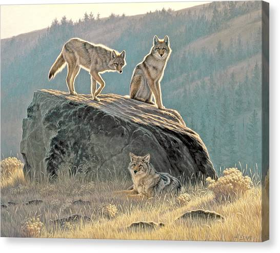 Coyotes Canvas Print - Morning Lookouts by Paul Krapf