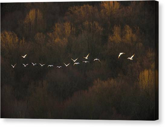 Formations Canvas Print - Morning Mood by ??? / Austin