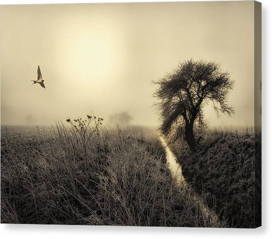 Swallow Canvas Print - Morning Mood by Kent Mathiesen