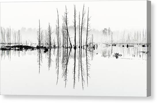 Morning Mystery Pine Lands Canvas Print