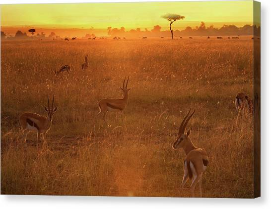 Kenyan Canvas Print - Morning by Phillip Chang
