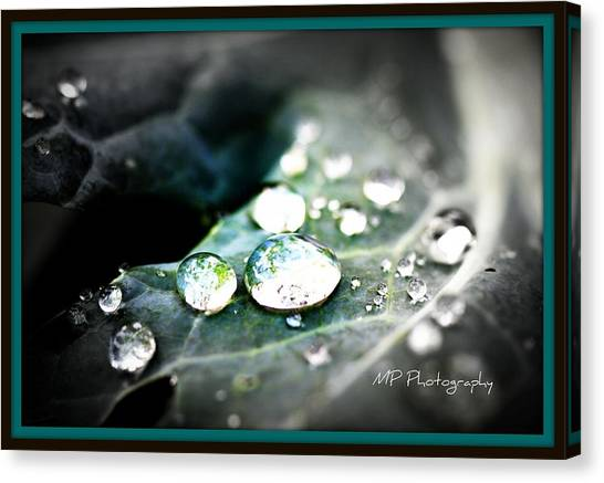 Morning Rain Canvas Print