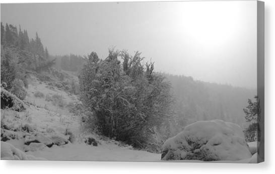 Morning Snow Shower Canvas Print