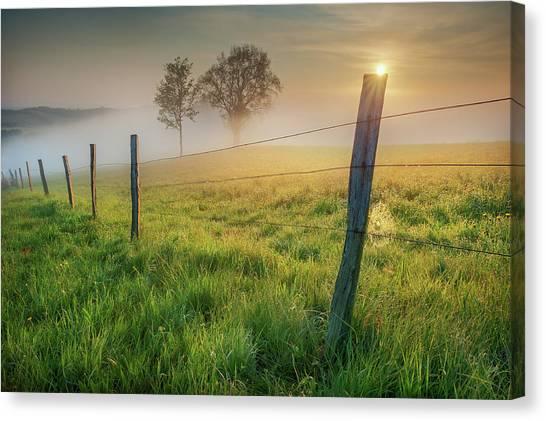Grass Canvas Print - Morning Sun by Burger Jochen