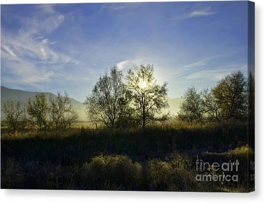 Morning Sun  Canvas Print by Nicole Markmann Nelson