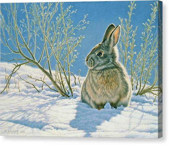 Rabbit Canvas Print - Morning Sun by Paul Krapf