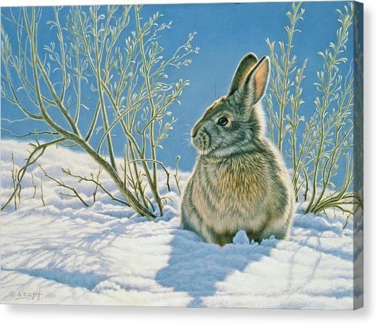 Rabbits Canvas Print - Morning Sun by Paul Krapf
