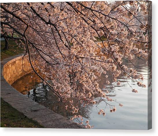Morning Sunshine In A Pond Canvas Print