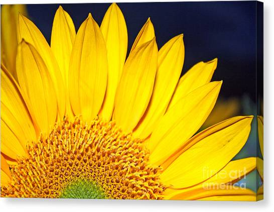 Morning Sunshine Canvas Print