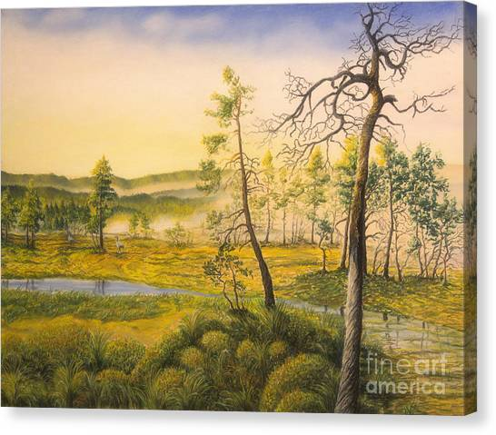 Mossy Forest Canvas Print - Morning Swamp by Veikko Suikkanen