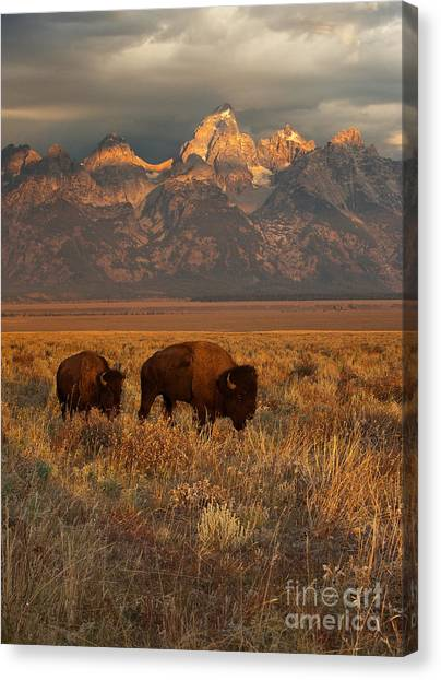 North American Canvas Print - Morning Travels In Grand Teton by Sandra Bronstein