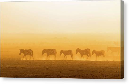 Dust Canvas Print - Morning Walk by Hao Jiang