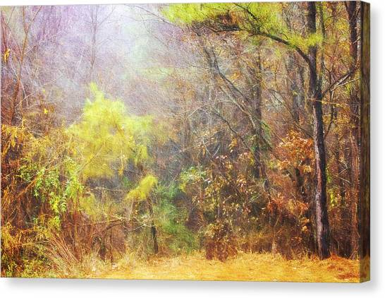 Landscape - Trees - Morning Walk In The Woods Canvas Print by Barry Jones