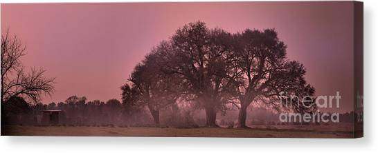 Morning Whispers In Mississippi Canvas Print
