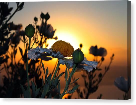 Morning's Glory Canvas Print