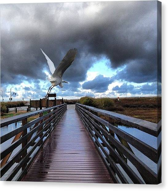 Wetlands Canvas Print - #mornings #life #staystoked #hb by Mikeslivingit Ehrman