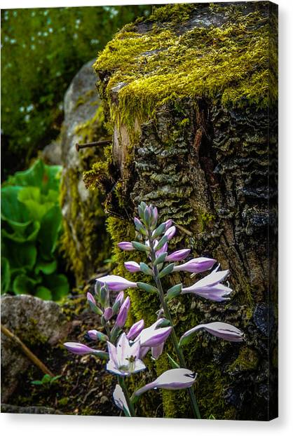 Moss And Flowers In Markree Castle Gardens Canvas Print