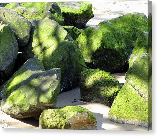 Moss On The Rocks Canvas Print