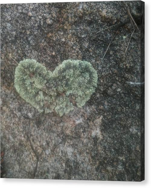 Moss Heart  Canvas Print