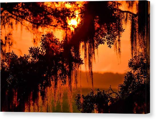 Moss Meets Sun  Canvas Print