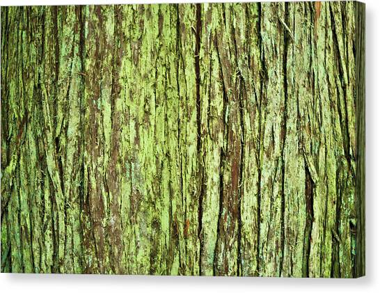 Moss On Tree Bark Canvas Print