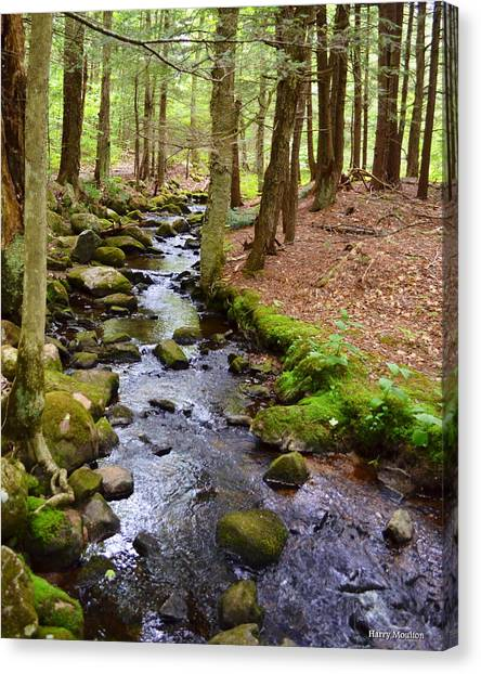 Mossy Brook Canvas Print