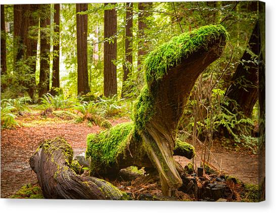 Mossy Creature Canvas Print