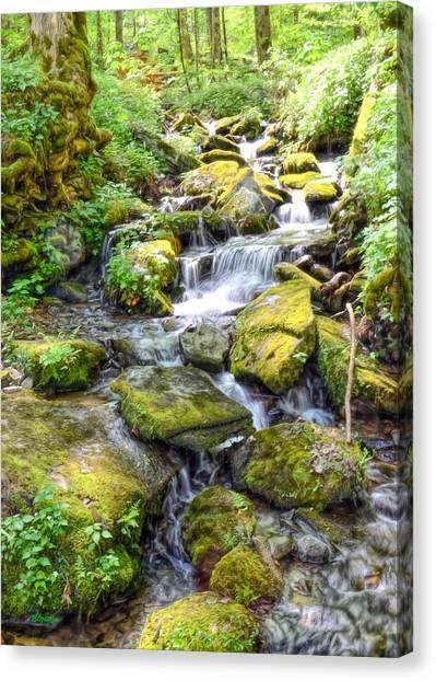Mossy Creek Canvas Print by Bob Jackson