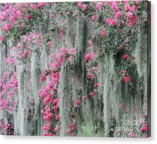 Mossy Crepe Myrtle Canvas Print