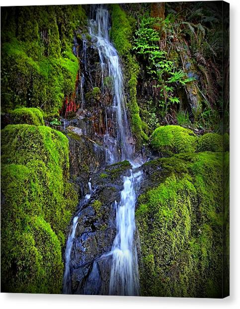 Mossy Forest Canvas Print - Mossy Falls by Nick Kloepping