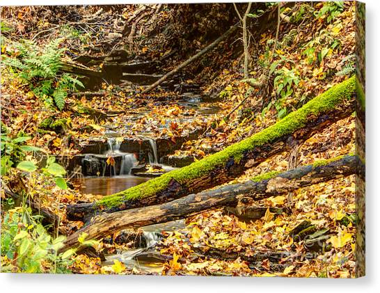 Mossy Log And Stream Canvas Print