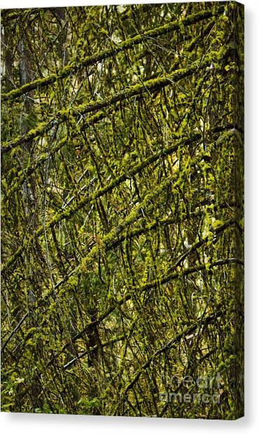 Mossy Forest Canvas Print - Mossy Maze by Andrea Goodrich