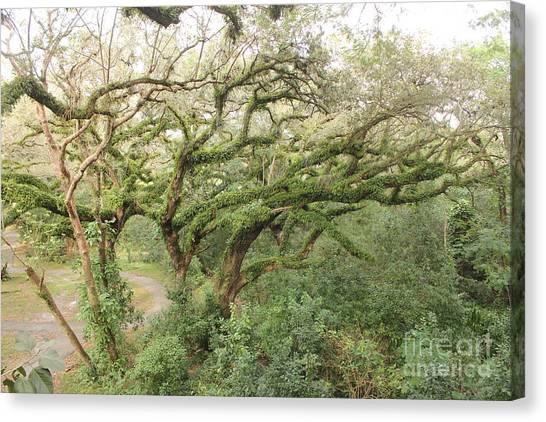Mossy Oak Canvas Print by Joseph Williams