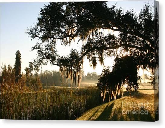 Mossy Oak Morning Canvas Print